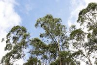 USING WOOD CAN INCREASE FOREST COVER